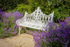 Bench-and-Lavendar