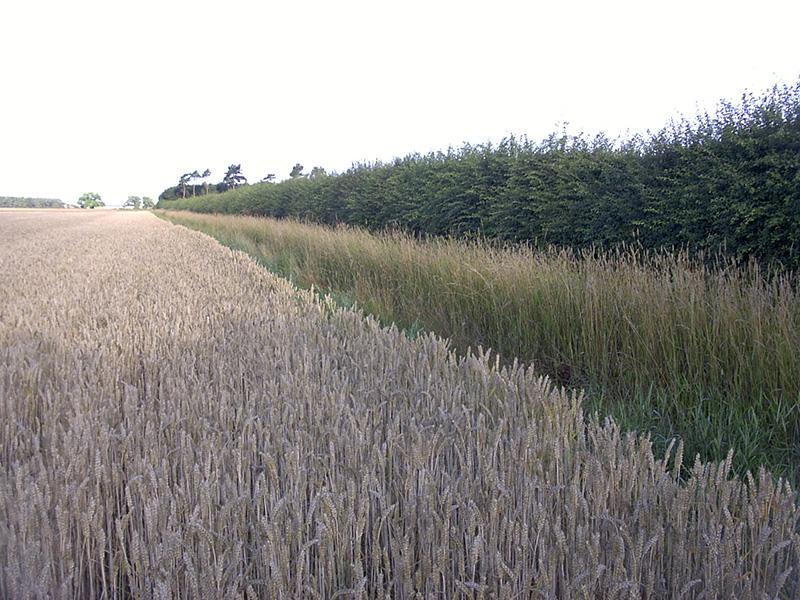 Grass Margin